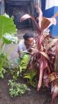 carnaval EA plantation (4)